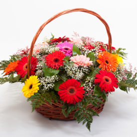 15 Mixed Gerbera with Basket