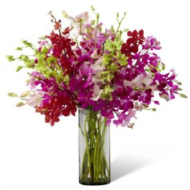 15 Mixed Orchids with vase