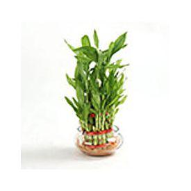 3 Layer Bamboo