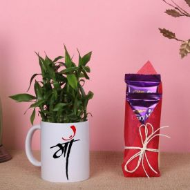 Lucky Bamboo in a Mug with Chocolates