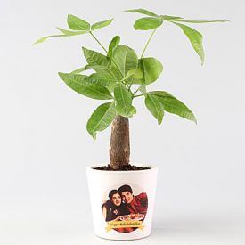 Pachira Bonsai in Personalised Ceramic Pot