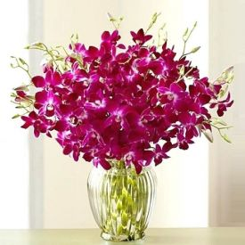 Purple Orchid with vase