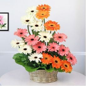 20 Mixed Gerbera with Basket