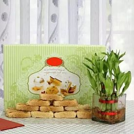 Box of Milk Cake with Plant
