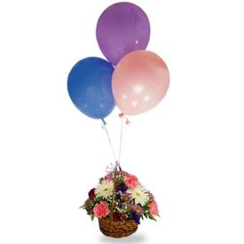 Basket of 20 mixed Gerbera and Carnation with 10 Balloons