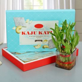 Box of Kaju Katli with Plant