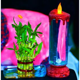 Candle N Bamboo Plant