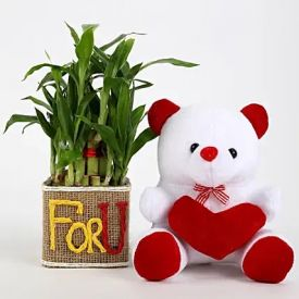 Lucky Bamboo In Vase With Teddy Bear