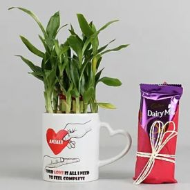 Lucky Bamboo Plant with Dairy Milk Silk