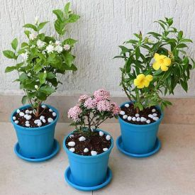 Set of 3 Outdoor Flowering Plants