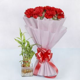 Carnation with lucky Bamboo