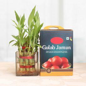 Bamboo with Gulab Jamun