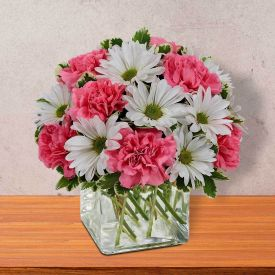 Affected Gerberas with Carnations