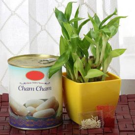 Cham Cham With Bamboo Plant