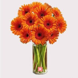 Orange Gerberas in Vase