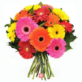 12 Mix Gerbera Bouquet Wrapped with Cellophane