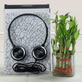 Lucky bamboo With Music