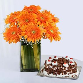 8 Orange Gerberas in a Glass Vase with Black Forest Cake