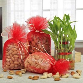 Lovely Combo Bamboo Plant & Dry fruits