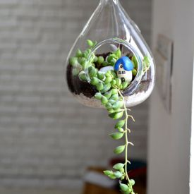 Hanging Pear-shaped Terrarium