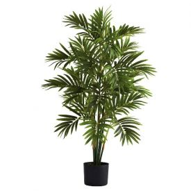 Refresh Areca Palm