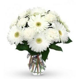 White gerbera with vase