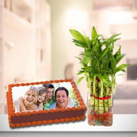 Photo Cake With Plant