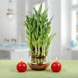 bamboo plants with red candels