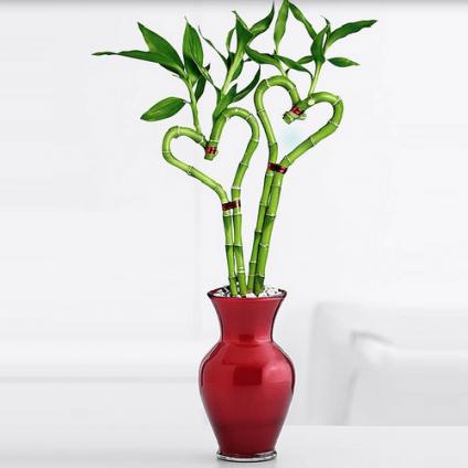 Love Plants 2 Heart Shaped Bamboo