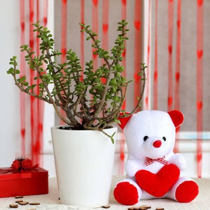 Jade Plant & Teddy Bear Combo