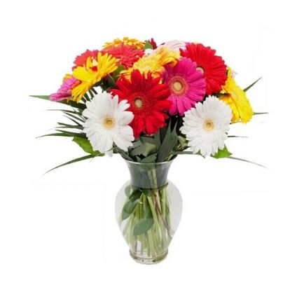 20 Mixed Gerberas with Vase
