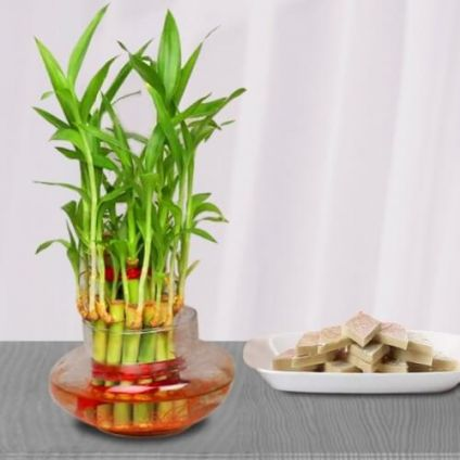 Bamboo Plant and Kaju Katli