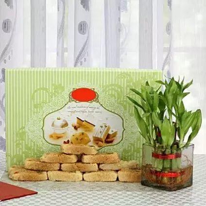 Box of Milk Cake with Plant