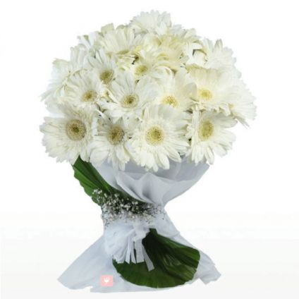 Bunch of 20 white Gerbera