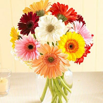 collection of 12 multi color gerberas in a vase