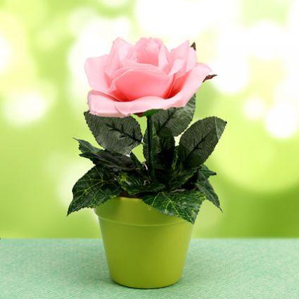 Loving Blooms Plant