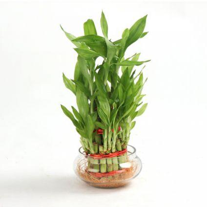 Three Layer Bamboo Plant