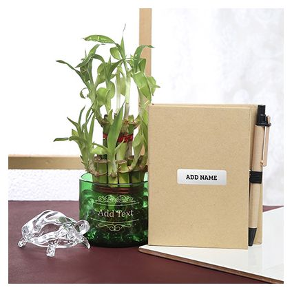 Bamboo Plant in Glass with Notepad & Tortoise