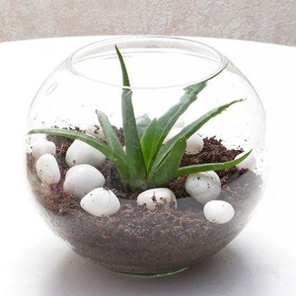 Aloevera With Vase