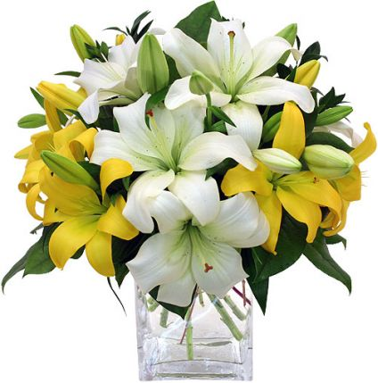 Yellow and White lilies with