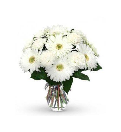 White gerbera with vase