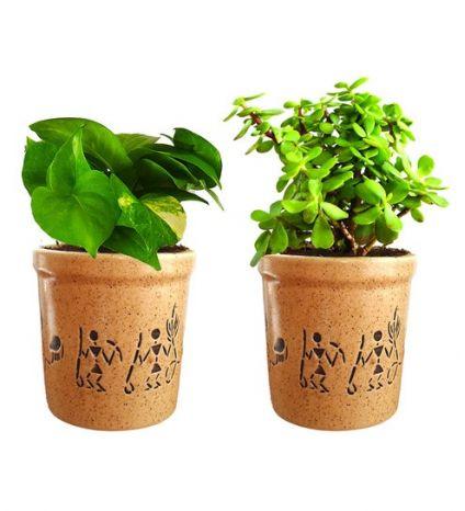 Natural Green Plant
