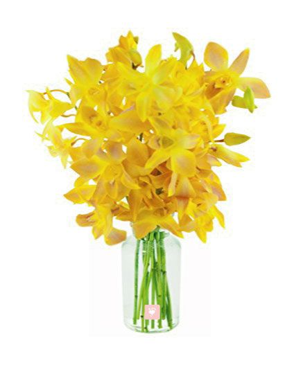 Bunch of 10 Yellow Orchids in Vase